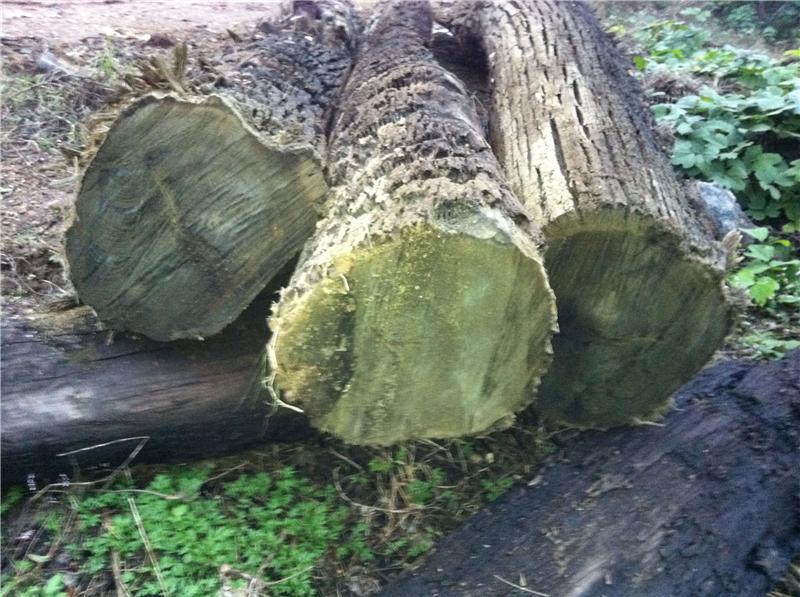金丝楠阴沉木