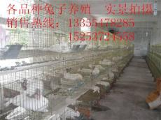 肉兔现在什么价格 哪有卖肉兔的 养殖肉兔发