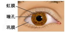 虹膜识别门禁监控考勤系统