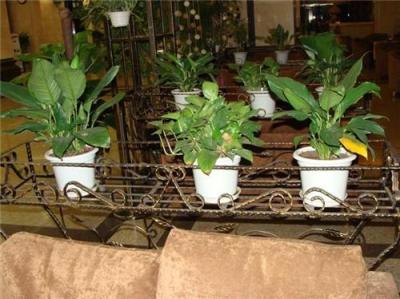 杭州滨江区办公绿化植物
