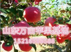 供應山東紅富士蘋果