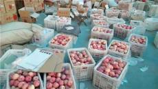 山東蘋果便宜的地方 蘋果基地 山東哪里蘋果