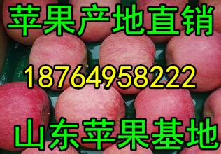 山东红富士苹果价格今日红富士苹果价格行情