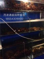 青島現貨供應鮮活紅毛蟹 熟凍紅毛蟹 生凍紅