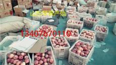 東北蘋果市場 蘋果基地 山東蘋果哪里的多