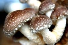 出售精包裝深加工優質土香菇